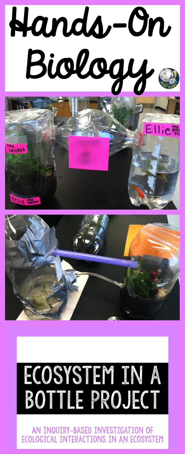 Take what students learn in class and apply it to living things! The Ecosystem…