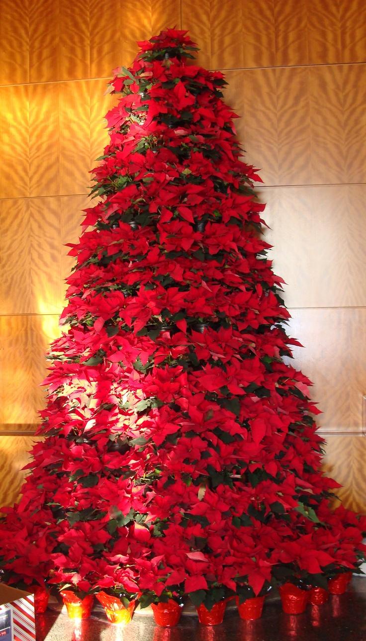 117 best poinsettias images on pinterest poinsettia - Fotos de arboles de navidad decorados ...
