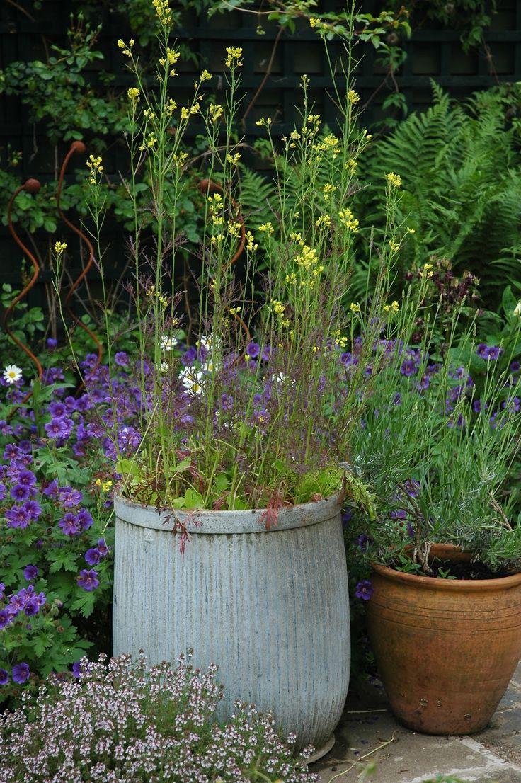 Tuckshop Gardener: Any old iron (or tin)?