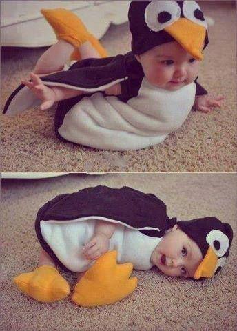 GrabOn #Awestruck: Cutest Penguin ever! :)