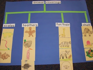 tree map: animal coverings - I could use to classify anything. Wonderful idea.