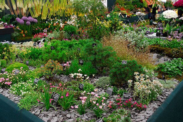 Alpine Garden Design Photo Decorating Inspiration