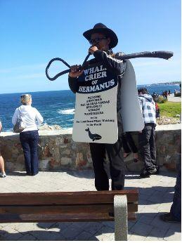 Hermanus Whale Festival - 9 Reasons to Visit