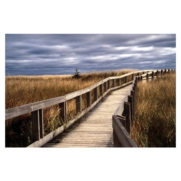 big_beach_meadows_boardwalk_web.jpg (Image JPEG, 566x377 pixels) ❤ liked on Polyvore