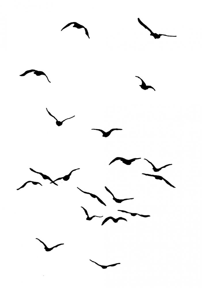 Flying birds                                                       …
