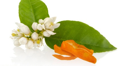 #NEROLI  Produced from the blossoms of the bitter orange tree, the ancient Egyptians embedded Neroli, (an aphrodisiac), in wax cones worn on the heads of temple dancers.  As the cones melted in the heat of the dance, the air filled with revitalizing aroma.