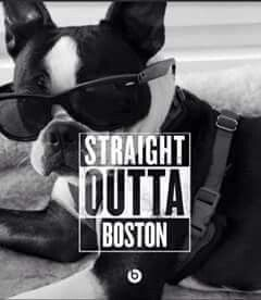 Straight Outta Boston - My Doggy Is Delightful