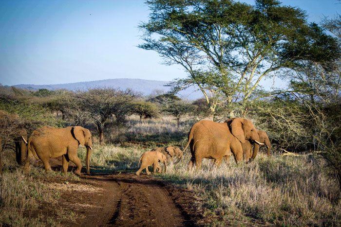 Follow the leader! Elephant sighting at Rhino River Lodge, Luxury Safari Lodge, KZN