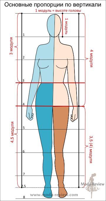 В вертикальной плоскости: положение линии талии и соотношение длины ног и головы с торсом. Высота от макушки до талии равна 3 модулям, длина туловища от талии и ноги — 4,5 или 5 модулей. Талия делит фигуру на 2 неравные части — 3:5. Это «золотая пропорция» или «золотое сечение» Леонардо да Винчи. Длина ног равна длине туловища и головы.