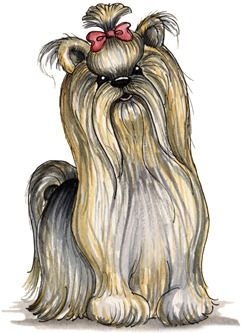 Laurie Furnell - Yorkshire Terrier