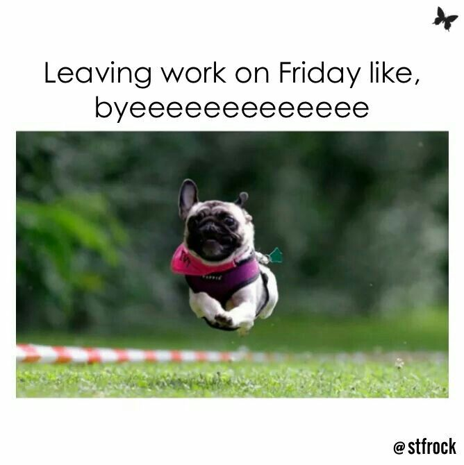 Happy Friday Funny Work: 109 Best Images About Friday On Pinterest