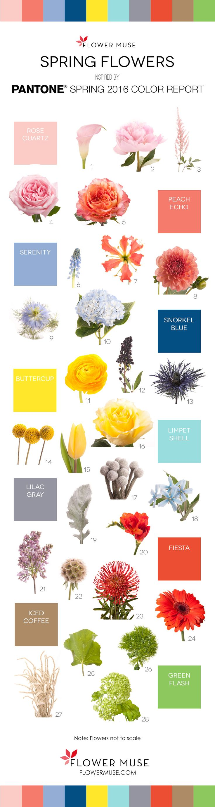 Spring Flowers inspired by Pantone 2016 Spring Color Report. See it on Flower Muse blog: http://www.flowermuse.com/blog/2016-spring-flowers-pantone-inspiration/