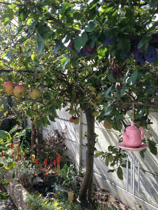 Appel en pruimen boom in de tuin!!