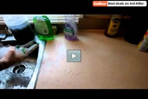 Need to try this, how to kill ants with dishsoap and water.