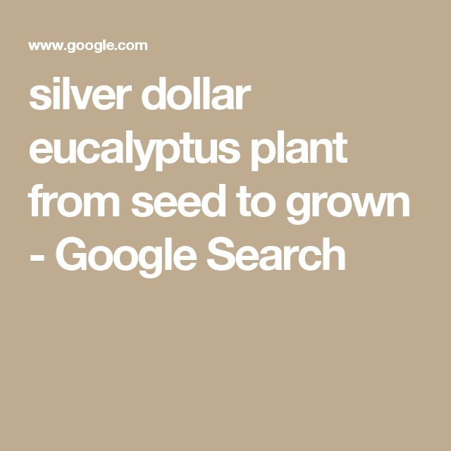 silver dollar eucalyptus plant from seed to grown - Google Search
