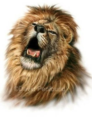 Lions by David Penfound