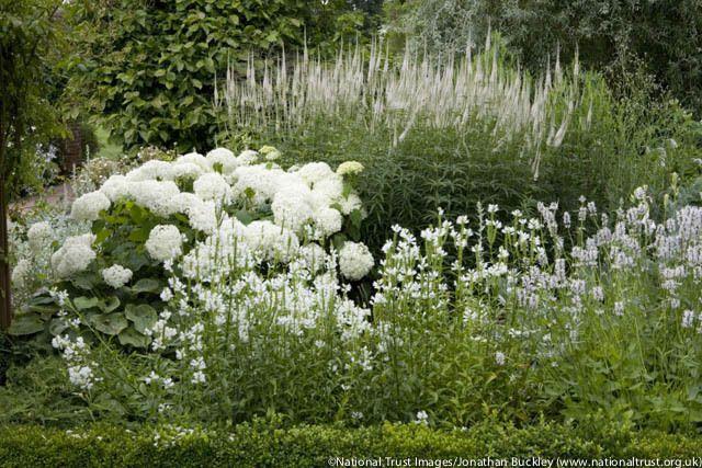Hydrangea Arborescens Annabelle, Smooth Hydrangea 'Annabelle', Hydrangea 'Annabelle', White hydrangea, Best hydrangeas, AGM Hydrangeas