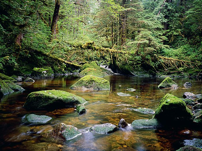 Great Bear Rainforest - British Columbia | Photography