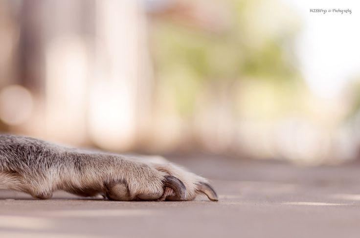 https://flic.kr/p/tJKRUz | 2 de Junio Día Nacional de Perro en Argentina. | La manito de la foto le pertenece mi perrita Sheyloca (?) ♥ Así la llamo de cariño jajaja :)  El 2 de junio se conmemora el Día Nacional del Perro en Argentina, en honor a un perro llamado Chonino que dio su vida por su mejor amigo humano.  Chonino era un ovejero alemán nacido el 4 de abril de 1975. El 15 de diciembre de 1977 ingresó a la Policía Federal Argentina luego de aprobar las pruebas de aptitudes físicas y…