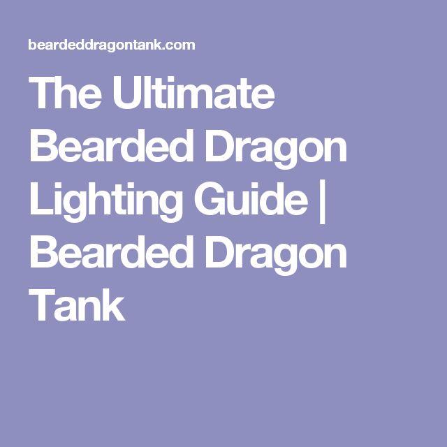 The Ultimate Bearded Dragon Lighting Guide | Bearded Dragon Tank