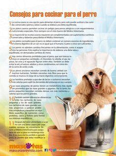 Consejos para cocinar para el perro, ¿Piensa alimentar a su mascota con comida casera? Aquí unos consejos que esperamos les ayude a tener éxito en esta tarea. Lean el artículo completo sobre métodos alternativos para alimentar a perros y gatos en #mascotasrevista