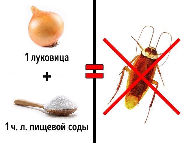 3 безопасных способа избавиться от насекомых в доме