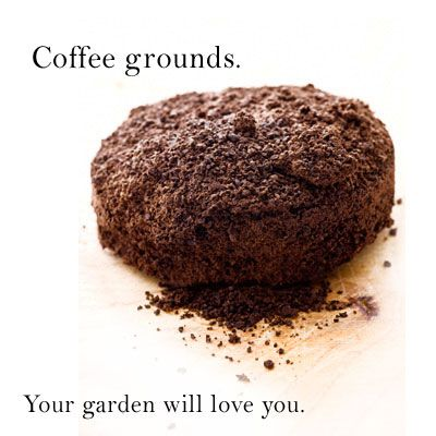 Coffee Grounds - Coffee by-products can be used in the garden and