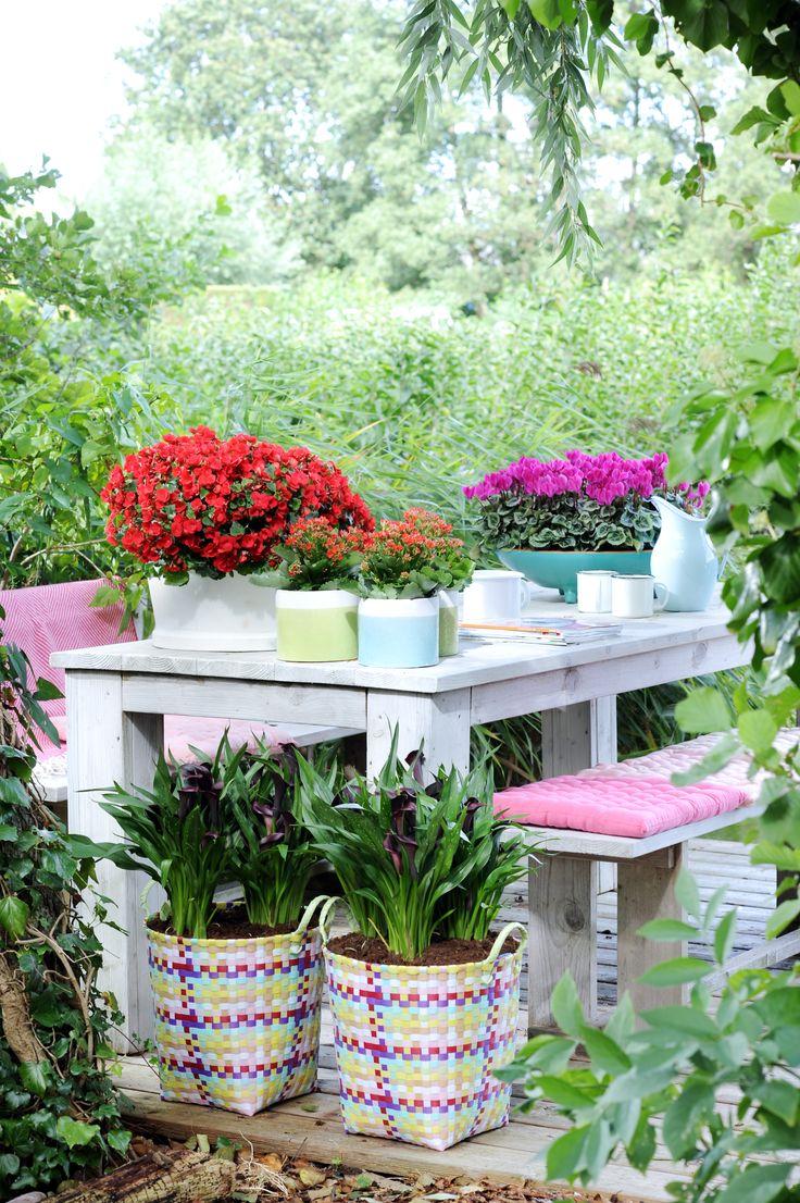 Die Betulia, Calla und Kalanchoe machen es sich auf der Terrasse gemütlich #garten #pflanzenfreude #plant #pflanzen #outdoor #betulia