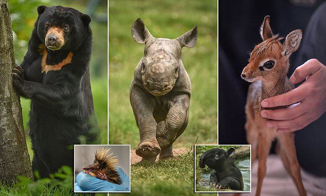 Chester Zoo showcase the cute animals born there in the last 12 months