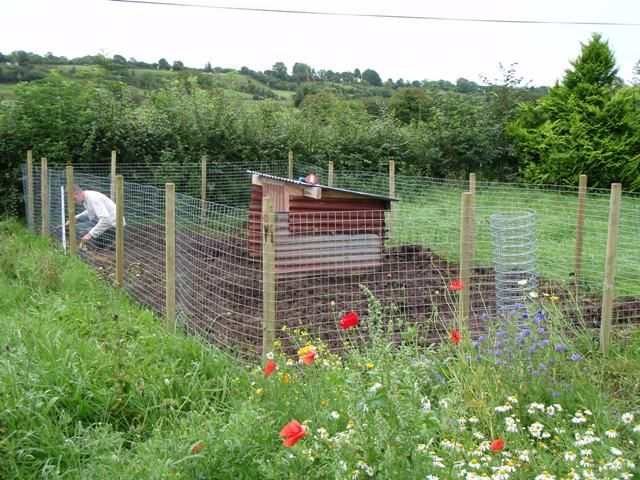 Pig Pen Chicken Coops And Pig Pin Pinterest Posts
