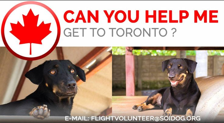 Are you departing from THAILAND and flying to TORONTO or VANCOUVER? Flight volunteers wanted!  https://www.facebook.com/SoiDogPageInEnglish/posts/1702759456432449