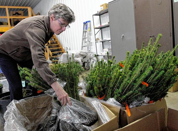 This rainy spring has emphasized the need to plant trees in Licking County wherever possible, said Denise Natoli Brooks, acting administrator for the Licking County Soil and Water Conservation District.