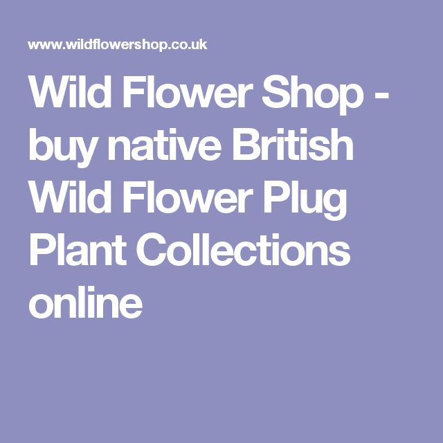 Wild Flower Shop - buy native British Wild Flower Plug Plant Collections online