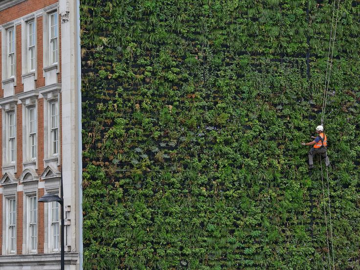 Standing at 350 square metres and made up from more than 10,000 ferns, herbaceous plants and 16 tonnes of soil, London's largest living wall – designed to reduce urban flooding – has been unveiled at the Palace hotel, Victoria, London