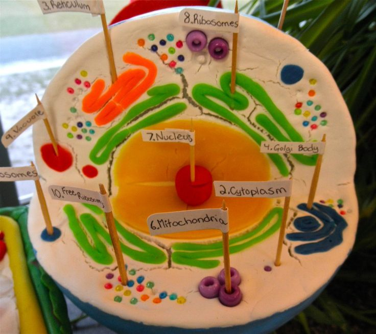 how to make a 3d plant cell model without food