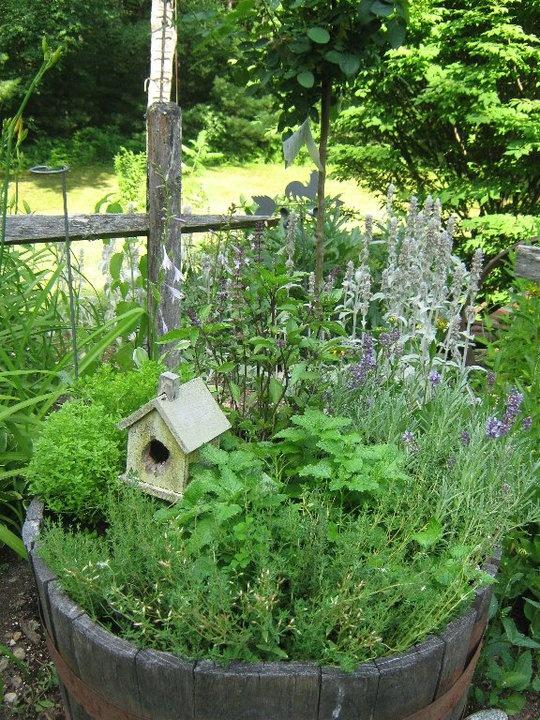 herbs in a barrel