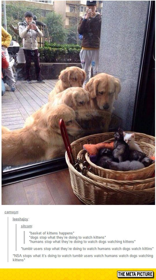 Pinterest users stop to watch NSA users watch tumblr users to watch people watching dogs watching kittens