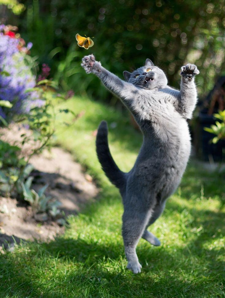 18 photos qui prouvent que les chats sautent comme de vrais ninjas