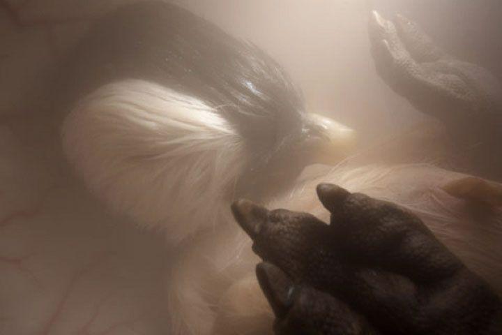 Pinguim dentro do útero