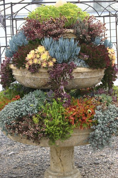 overflowing succulents in an old fountain
