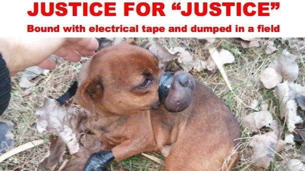 "Petition · Prosecuting Crown Attorney of Ontario Court of Justice: JUSTICE FOR ""JUSTICE"", LITTLE DOG BOUND WITH ELECTRICAL TAPE AND DUMPED IN A FIELD · Change.org"