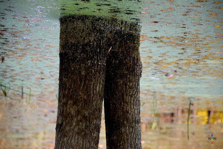 https://flic.kr/p/zWudfh   Natural legs