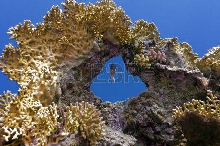 arrecife de coral con gran coral y peces exóticos único Foto de archivo