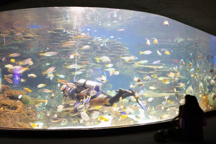 Ripley's Aquarium Gatlinburg - This is one of the finest aquariums you will ever visit!