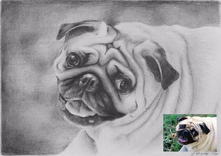 Custom original dog/cat drawing portrait from your photo A5 #Realism
