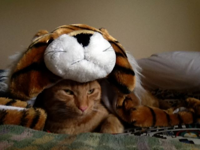 dress up cat...... I'm really a tiger!