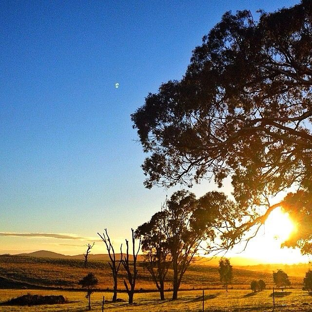 Thanks to Instagrammer handmadecanberra for sharing this gorgeous autumn image from Murrumbateman!