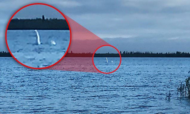 The supposed Russian Nessie - the mythical sea creature - was captured on camera in photographs showing what appears to be a white head and part of a body of a sea monster coming from the water.