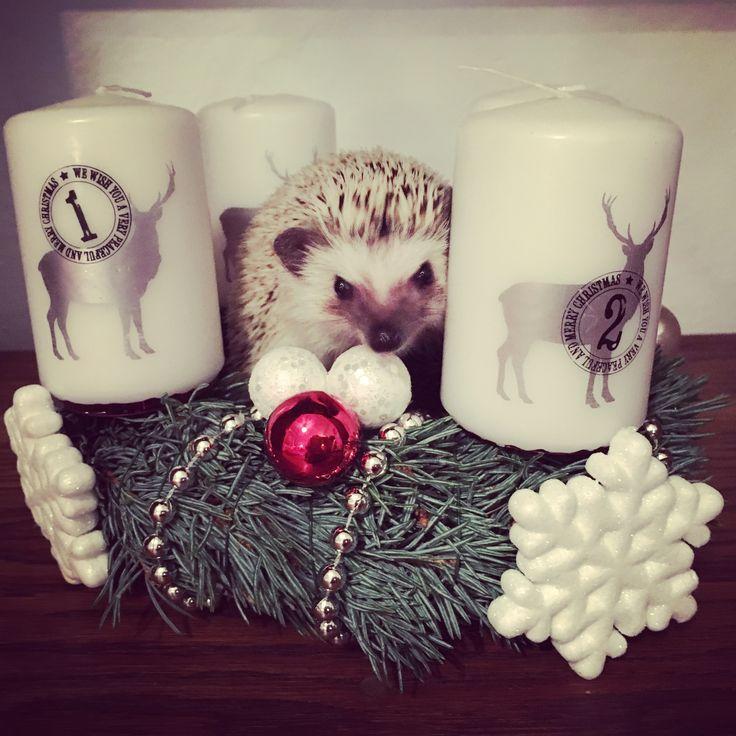 Ďáblík Vám přeje krásné Vánoce :)