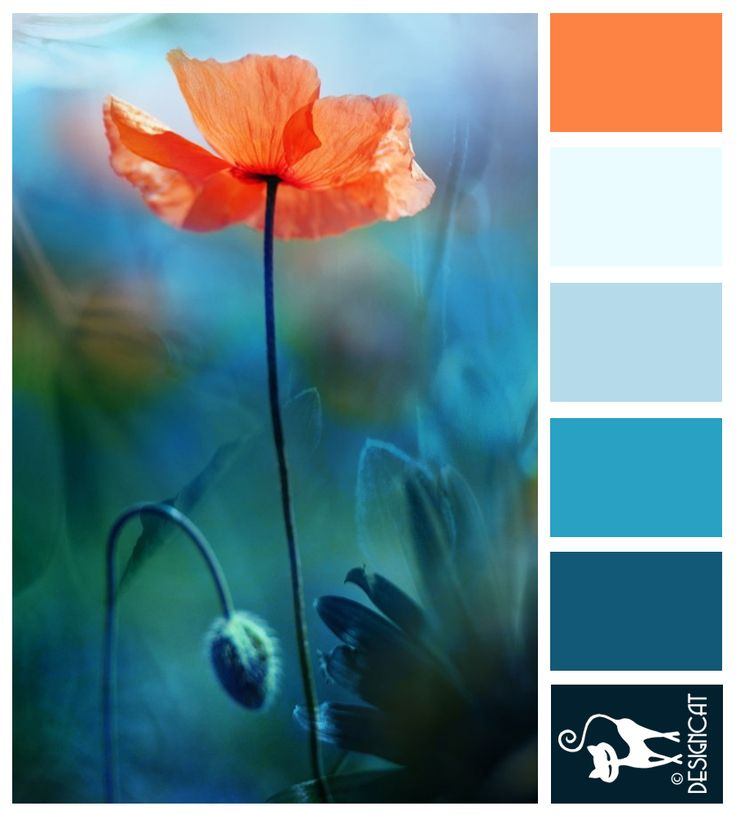 Poppy Love - Teal, Blue, tiffany, sky, pastel, orange - Designcat Colour Inspiration Pallet